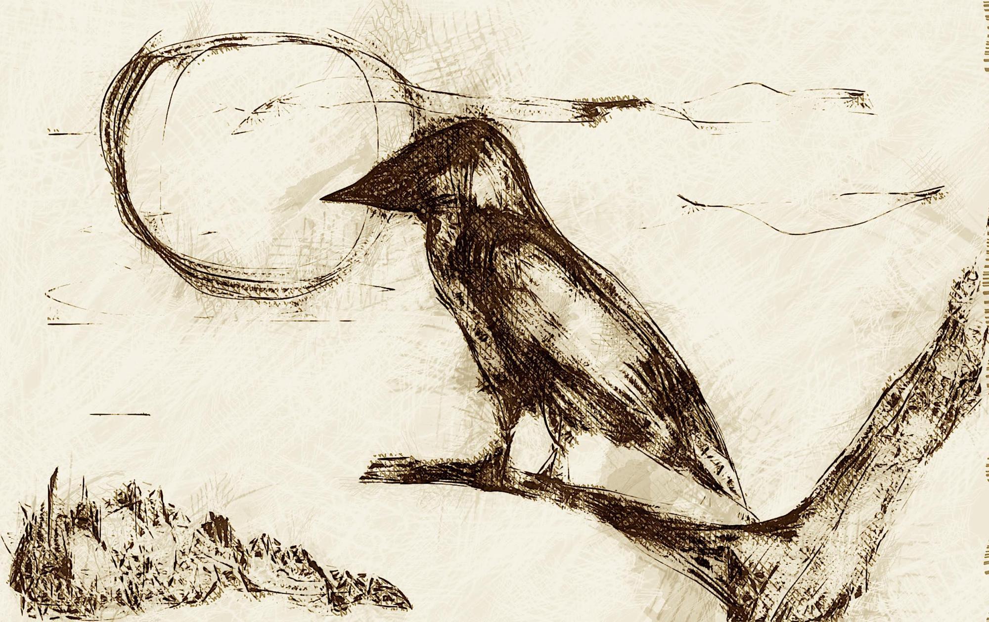 crow.jpg?w=2000