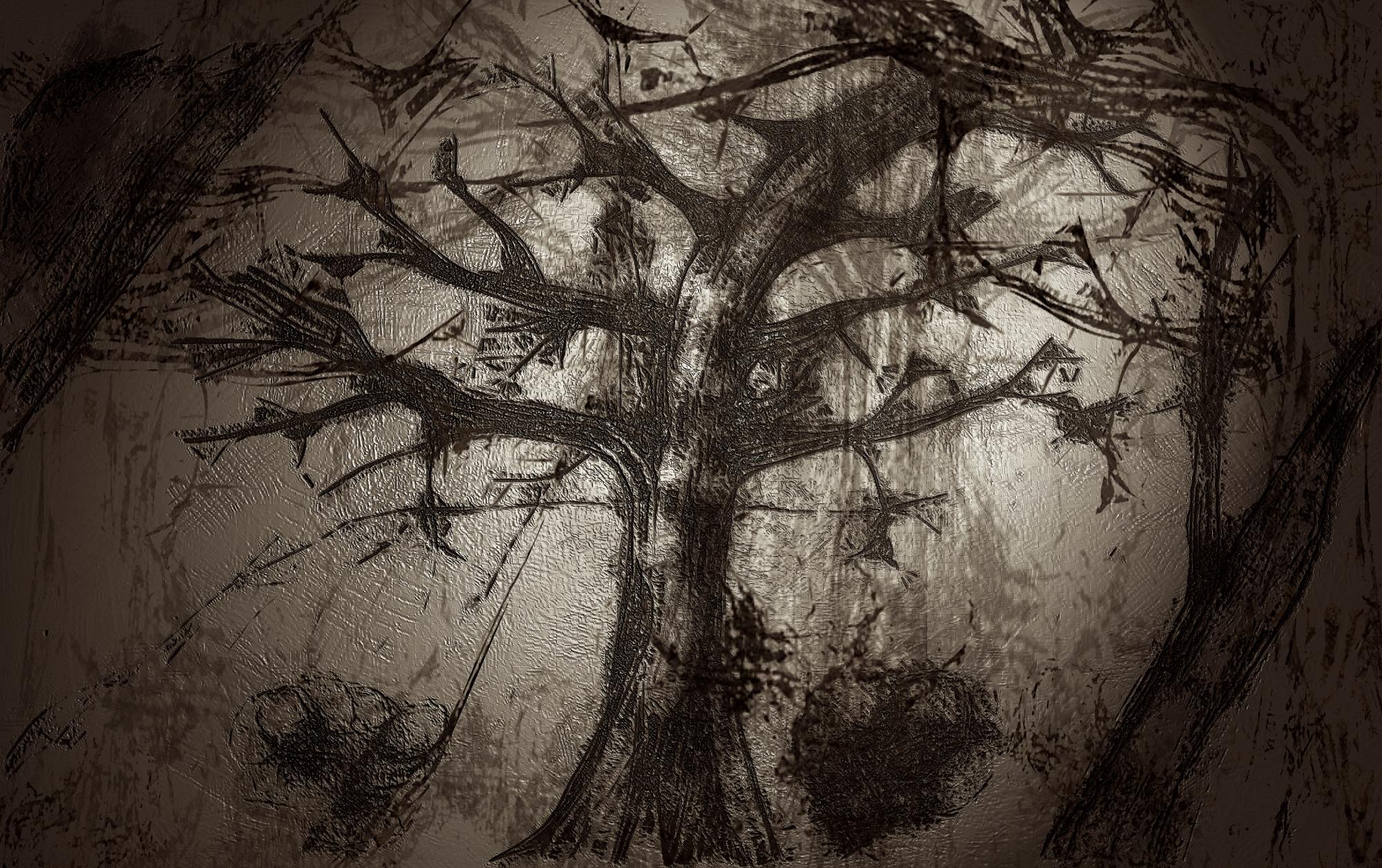 dark-forest.jpg?w=2000